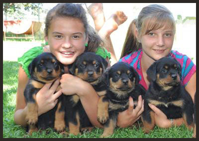 CHILDREN AND ROTTIES 2