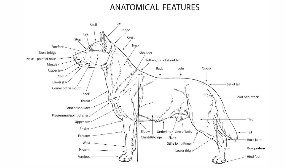 anatomical-features.png